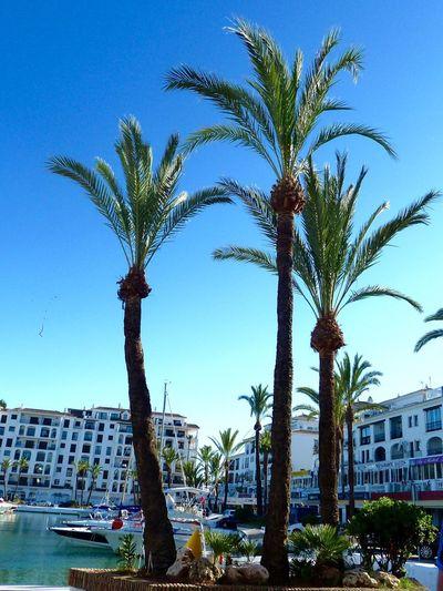 Duquesa SPAIN Palm Trees Marina Boats Blue Sky