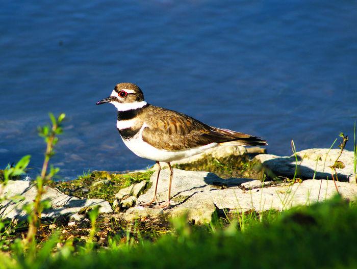 Bird on rock at lakeshore