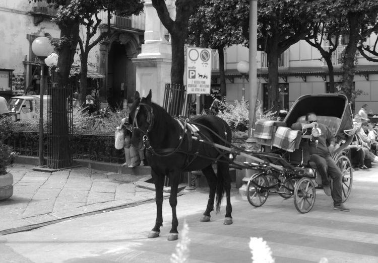Sorrento, Italia Cavalli Carrozzella Carrozza Biancoenero Horse Transportation Domestic Animals Mode Of Transport Horsedrawn Horse Cart Animal Themes Day Outdoors City