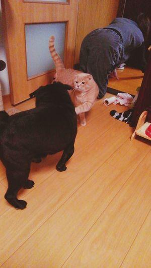 Animal Pets とっちゃん Animal Themes おパクちゃん Day Full Length 短い前足である。