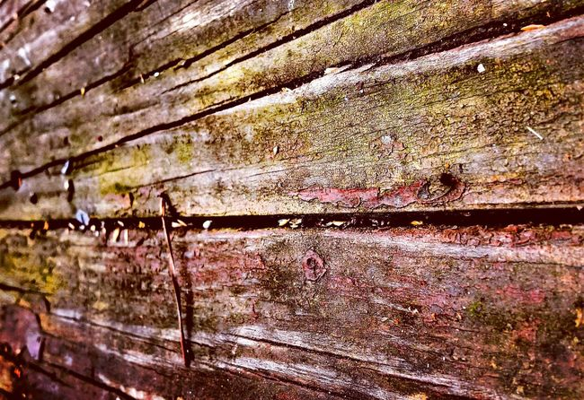 Close-up Macro Photography Naturelovers Nature Photography Moss Wooden Textures And Surfaces Textures And Grains