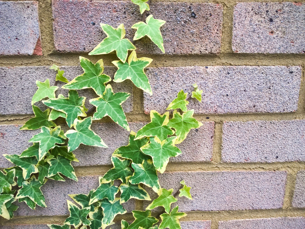 Close-Up Of Plants Growing On Wall