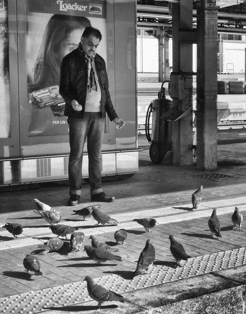 Bird Casual Clothing City City Life Day Full Length Leisure Activity Lifestyles Outdoors Pidgeon  Pidgeons