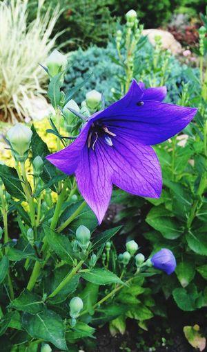 Nice Atmosphere Nature Flowers
