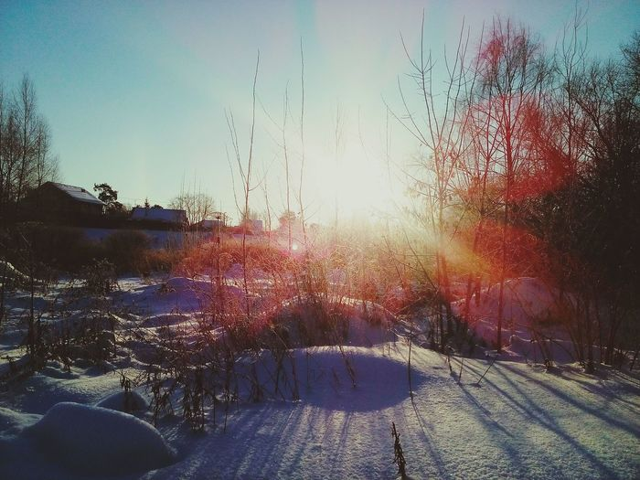 Sunset Sky Sun Outdoors No People Nature Day Sunny Sunlight Eye4photography  EyeEm Nature Lover Talvipäivä Poetry EyeEm Best Shots Rear View Beauty In Ordinary Things Nature EyeEm Gallery Winter EyeEm Best Edits Outdoor Photography Sunday Sunset_collection Cold Temperature Snow