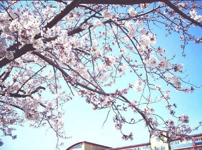 Jeju Take Photo School Life  High School
