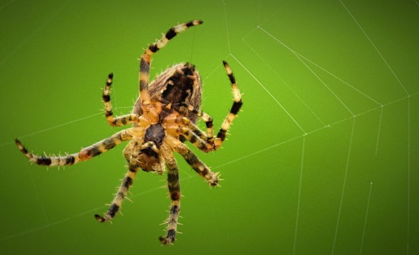 One Animal Animal Themes Animals In The Wild Insect Spider Web Wildlife Close-up Focus On Foreground Spider Nature Day Zoology Outdoors Web Green Color Fragility Spiderweb Green Beauty In Nature