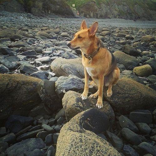 Tilly at the beach Dogs Of EyeEm Dogslife Dog Chilling Aberystwyth Beach