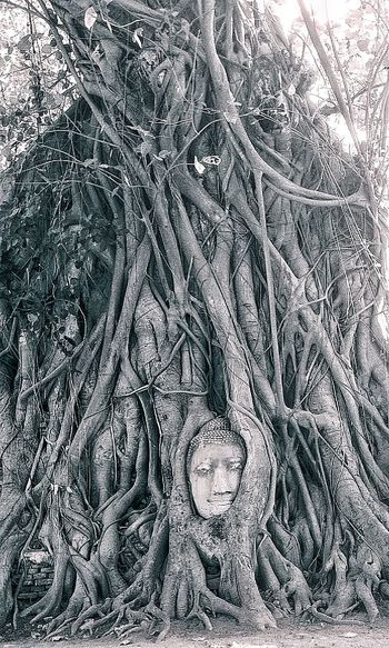 Ayutthaya Worldheritage Watmahathat Thailand Traveling Travelphotography TravelCHINOmrk Travelling 世界遺産 アユタヤ