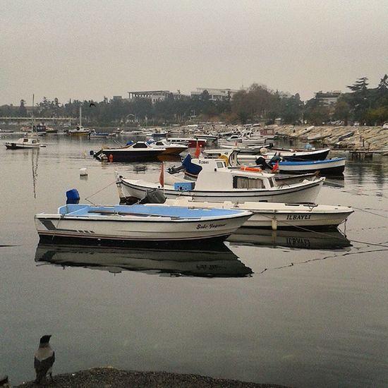 Bird Boats Sea