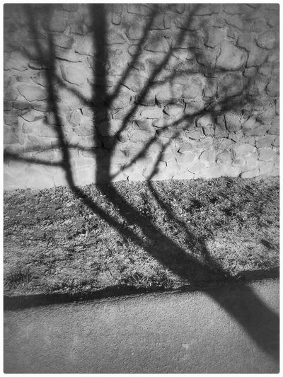 Tree Sunlight Focus On Shadow Outdoors Nature No People Day Close-up Black And White LifestylesShadowow Brocken Shadow