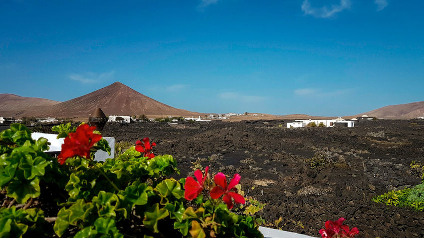 Betterlandscapes Samsungphotography Galaxys8plus Lanzarote Lanscape Photography Canary Islands Volcano Volcanic Landscape Lightroom Nature Landscape Outdoors Desert Beauty In Nature Flower Travel Destinations Mountain Nature Reserve Sky EyeEmNewHere