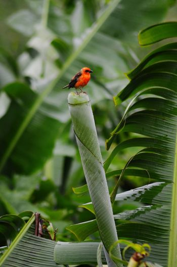 Animal Wildlife Leaf Bird One Animal No People Nature Perching Animals In The Wild Day Closing Photograph Multi Colored Tree Outdoors Close-up Animal Themes Mauritius 🇲🇺 Ishoot Mypicture😊 Littleredbird RainyDay