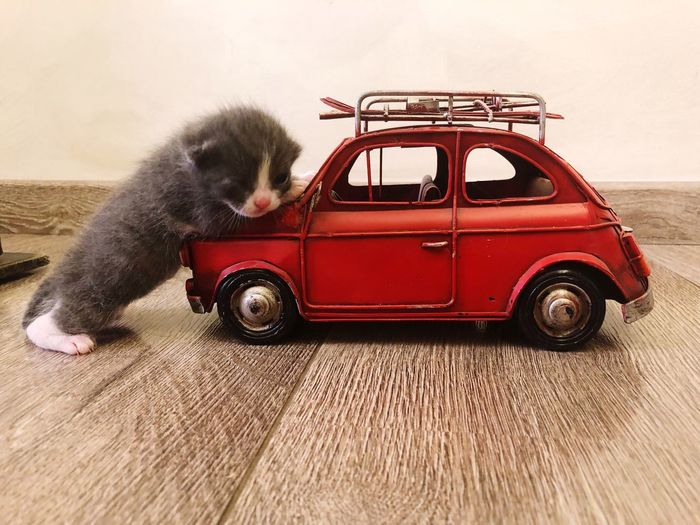 Newborn Kitten Transportation Mode Of Transportation Car Motor Vehicle Land Vehicle Childhood Toy Car Red Pets