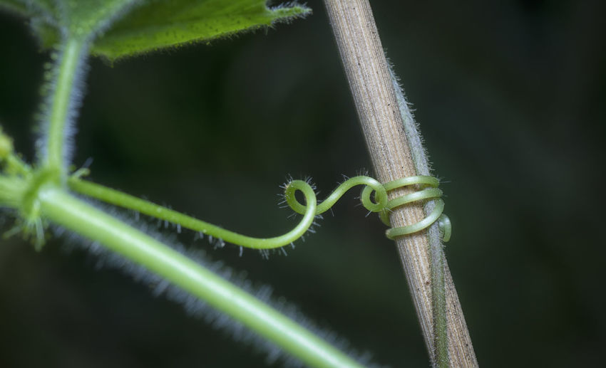 The plant's tendril