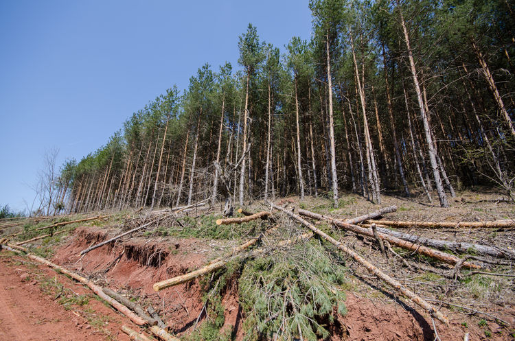 Stop deforestation 2 Deforestation Forest Nature Outdoors Sky Tree Tree Logs Tree Trunk Trees Water Wood Cut