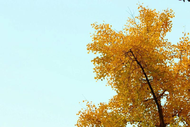 Beauty In Nature Clear Sky Autumn Outdoors Nature Sky Leaf ColdSeason