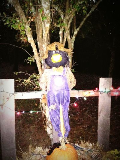 Fall Leaves Fun Outdoors October Sweet October! Tree No People Illuminated Outdoors Day Nature Close-up scarecrows Halloween fall Festival