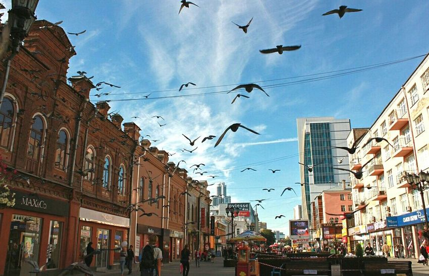 Ekaterinburg Ekaterinburgcity Ekaterinburg_foto Birds Pegions Spread Wings City Street Flying