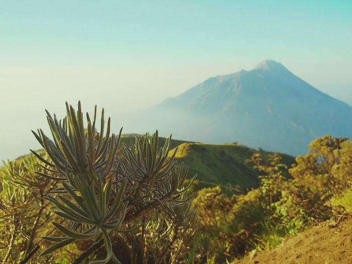 Merbabu mountain, center of java, indonesia