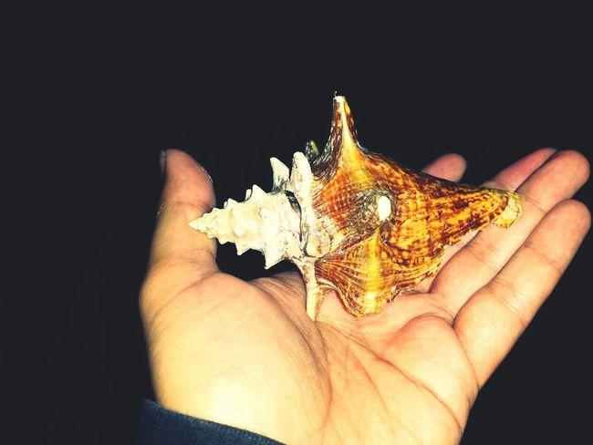 Seaanimal Caracol Mar ? Sea Caparazon Shell Puerto Rico Puertorico Kanyn Eyeem Puerto Rico