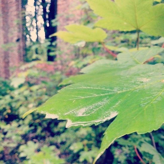 Wild Leaf Beauty Monday Zabrze Dresyidazanami Wet Nature Silesia Ruins