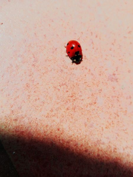 Red Ladybug Nature Makeawish