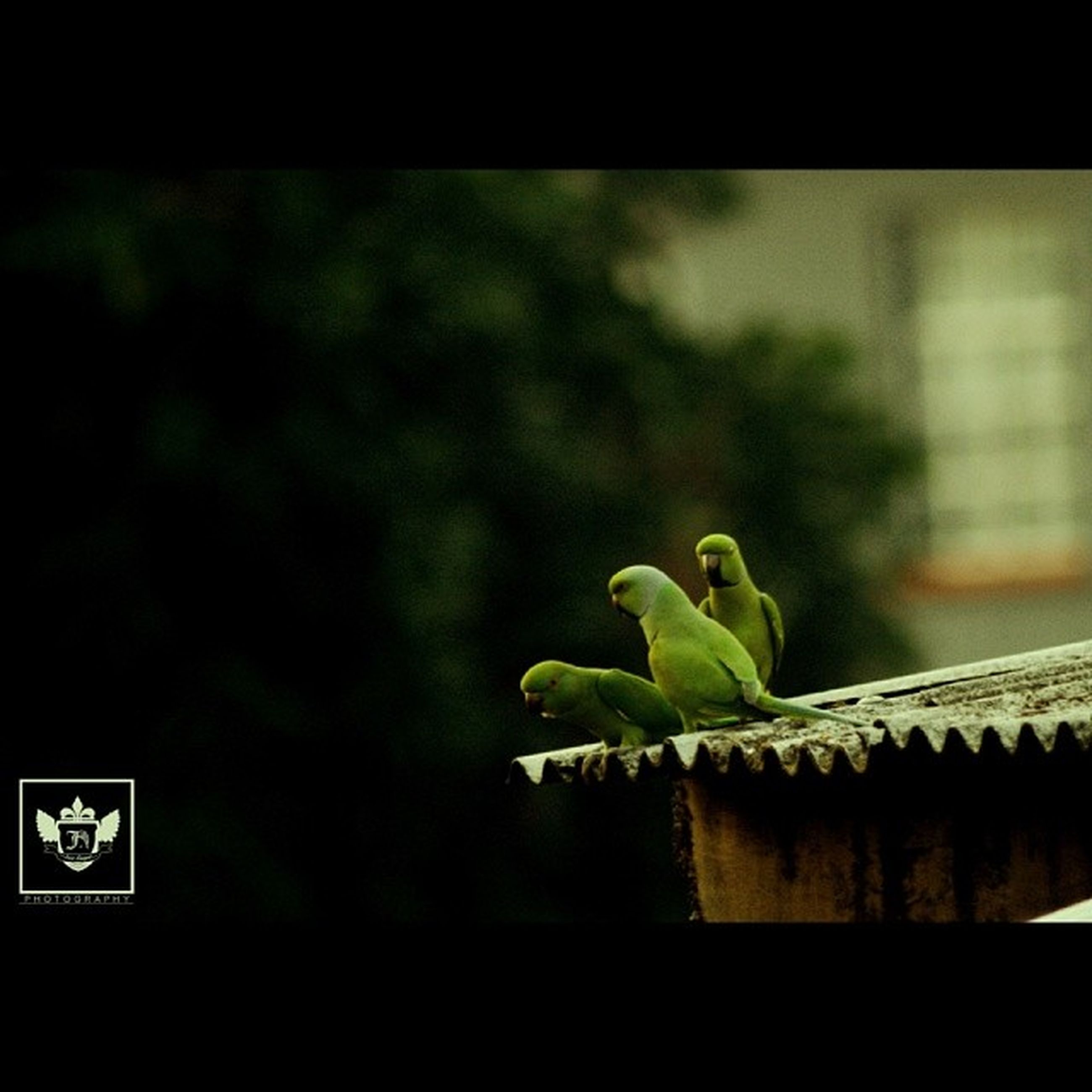 green color, leaf, focus on foreground, growth, close-up, plant, nature, green, selective focus, day, branch, no people, outdoors, growing, stem, tree, potted plant, sunlight, auto post production filter