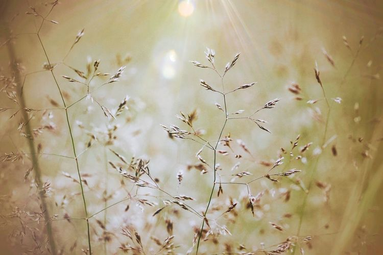 The City Light Nature Growth No People Beauty In Nature Plant Outdoors Day Close-up Light Nature Landscape Plants Flowers Bokeh Close Up Colors Macro