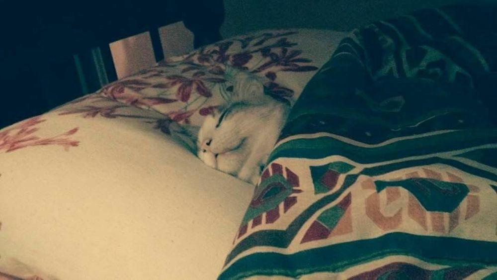 Inho my catkkk Catsleeping Cats 🐱 Fragility