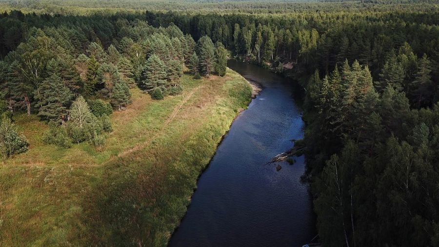High angle view of water flowing in forest
