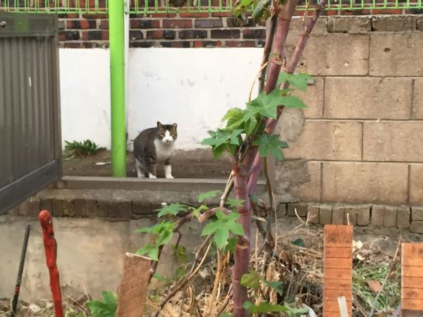 Hey There :) Cute Kitty Cat Hi! Hello
