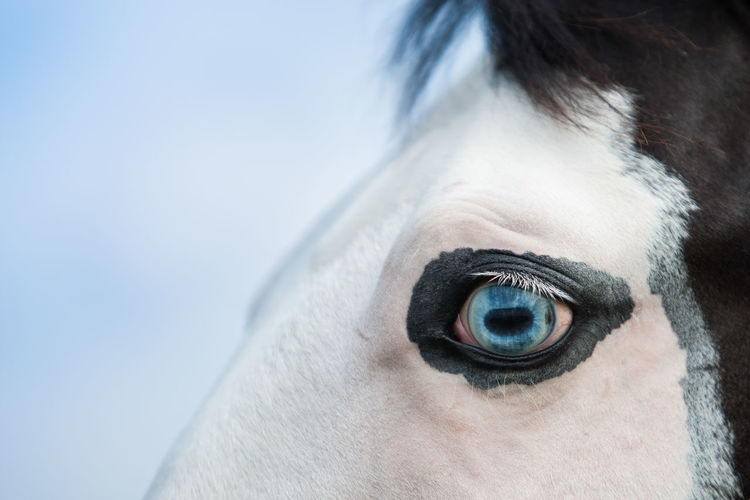 Cropped Blue Eye Of Horse Against Sky