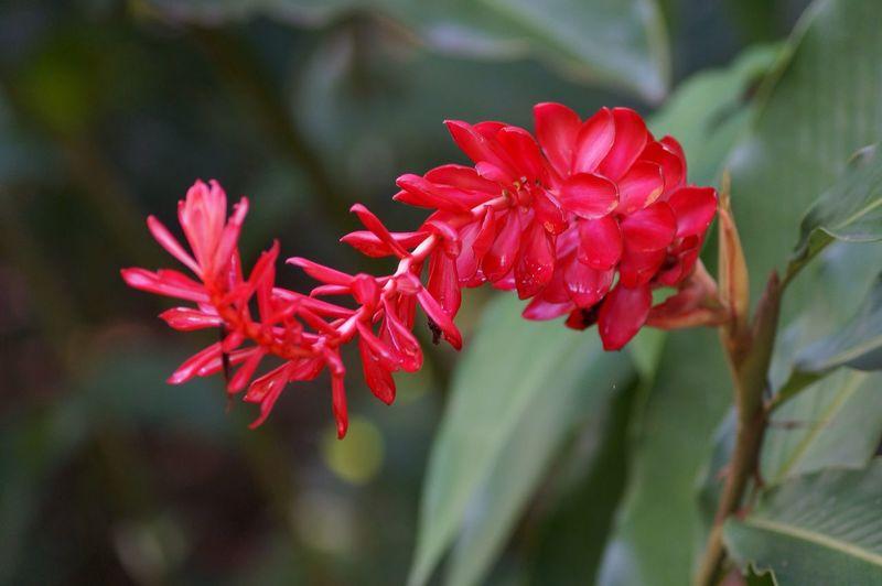 Flores Flowers Exotic Flowers Tapijulapa, Tabasco Jardin De Dios Rojo Close Up Petal Nature Bosque Beauty In Nature