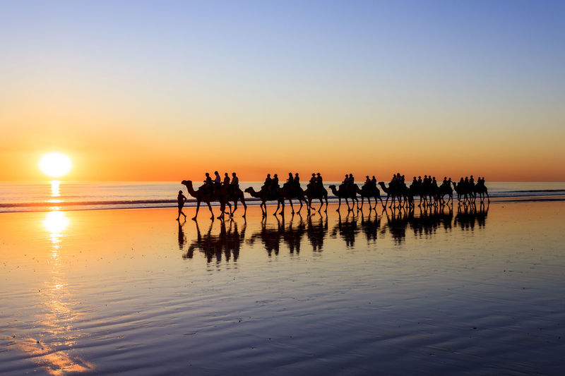 Camels carry tourists across Cable Beach, Broome, in far north Western Australia, Australia. Cable Beach, Western Australia Cable Beach Beach Beauty In Nature Cable Beach Sunset Camel Ride Clear Sky Horizon Over Water Leisure Activity Mammal Men Nature Real People Reflection Sand Scenics Sea Silhouette Sky Sun Sunset Togetherness Tranquil Scene Vacations Water