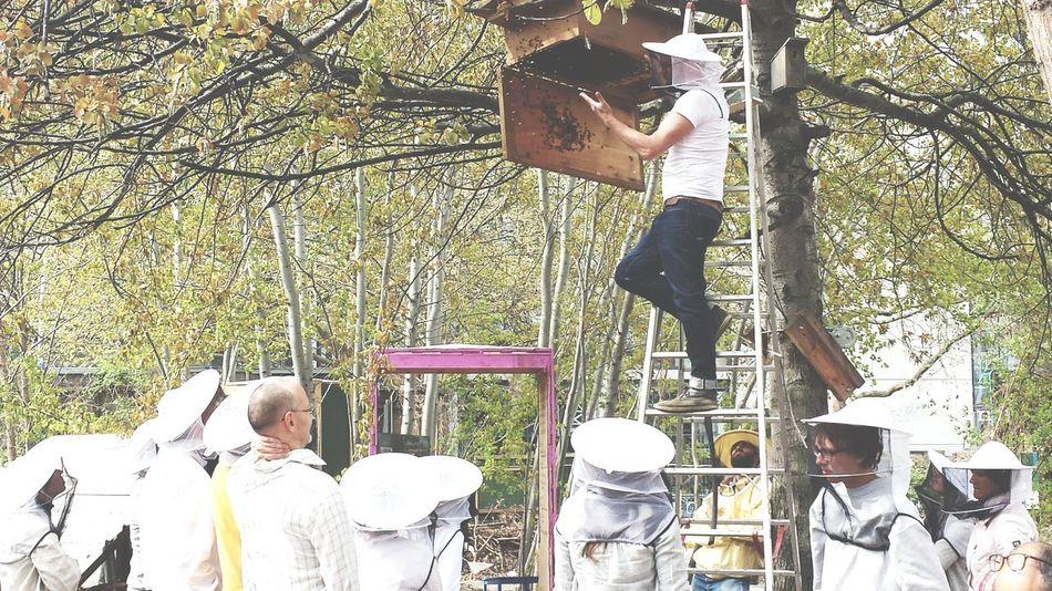 Honey Bees  Imker Workshop Living Bold
