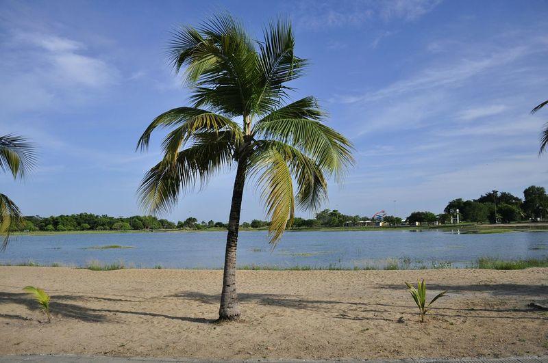 Visão relaxante. Coqueiro Parque Anauá Lake Lago Praia Beach