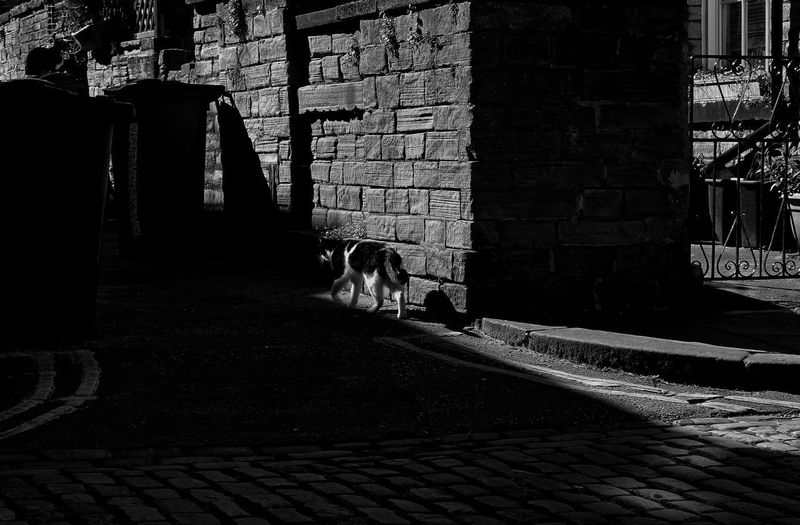 Alley Cat. Gate Alley Alleyway Architecture Black And White Black And White Cat Brick Building Exterior Built Structure Cat Cobblestone Day Domestic Domestic Animals Footpath Mammal No People One Animal Outdoors Pets Stone Wall Sunlight Vertebrate Wall Wheely Bins