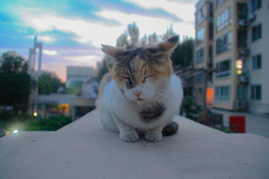 Animal Themes Mammal Outdoors Sky Close-up Homeless Cats Sunset Cloud - Sky Cute Cats