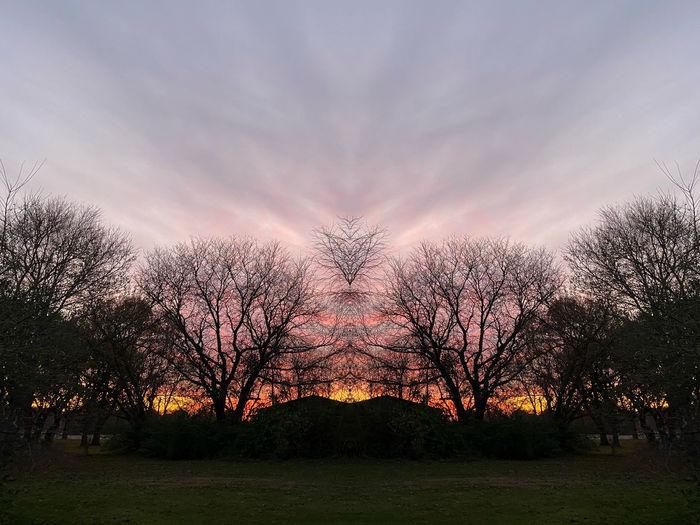 Mirrored Nature