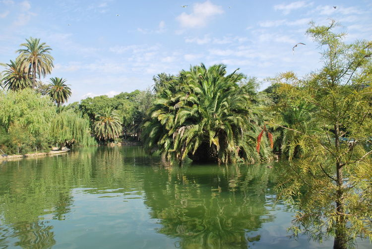 Barcelona Barcelona, Spain Catalunya Day Eco Tourism Green Lake Landscape Nature No People Outdoor Outdoor Photography Outdoors Outdoors Photograpghy  Outside Outside Photography Palm Tree River Sky SPAIN Tree Trees Tropical Climate Water
