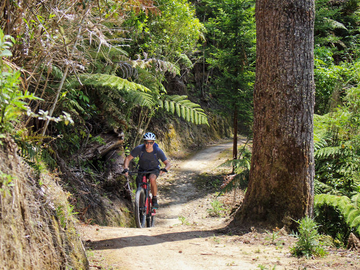 Rear view of person riding bicycle in forest