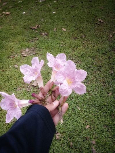flower to you Human Body Part Human Hand Hand Flowers Hand And Flower Pink Flower Pink Blossoms Blossom EyeEmNewHere