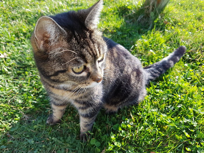 My sweet Cat One Animal Animal Themes Grass Day No People Mammal Green Color