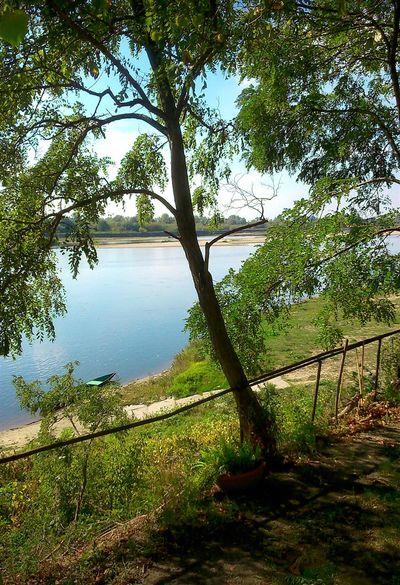 Tree Water Nature Beauty In Nature Czerwinsk Nad Wisla