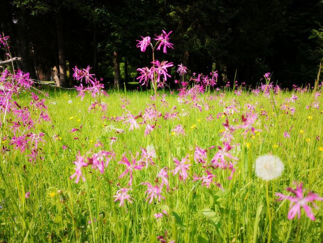 Beautiful Nature Beauty In Nature Nature Photography Nature EyeEm EyeEm Nature Lover Green Color Pink Color Flower Flower Head Flowerbed Pink Color Summer Grass Plant In Bloom Blooming Plant Life