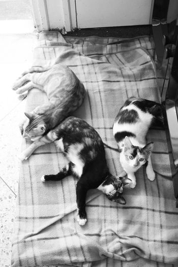 Wus Up human 🐈 🐈 🐈 Animal Representation Animal Themes Commando Group Family Relaxing Chilling Zenful Relaxation Sleeping All Day Sleeping Cats Cat Lovers Cuties Blackandwhite Monochrome Shades Of Grey Black Vs White Contrast Cats Portrait Looking Up Looking At Camera Domestic Cat Shootermag VSCO Vscocam