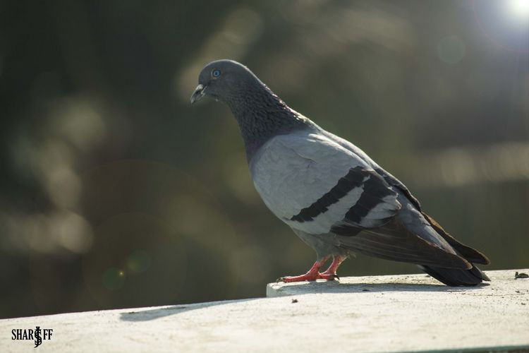 Canon Camera From DSLR Light And Shadow Morning Sky On Terrace Pigeon Shoot The Street With Pointer Footwear Sun Symbol Of Peace
