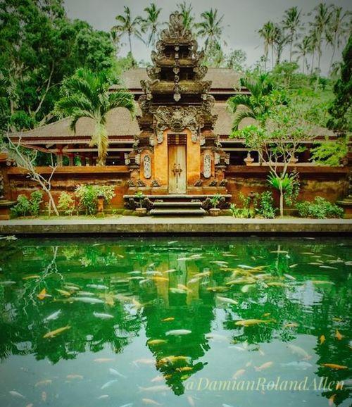 Temple Templebuilding Hindu Temple Hindu Culture Hindubali Water Pool View Bali, Indonesia Baliphotography Visitbali Religion Visitindonesia2017 Tirta Empul Temple DamianRolandAllen