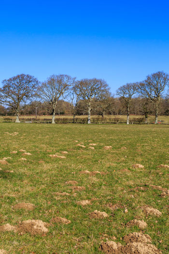 Trees and Mole Hills Clear Sky Field Trees Winter Blue Sky Countryside Landscape Mole Hills Moles No People Outdoors Rural Scene